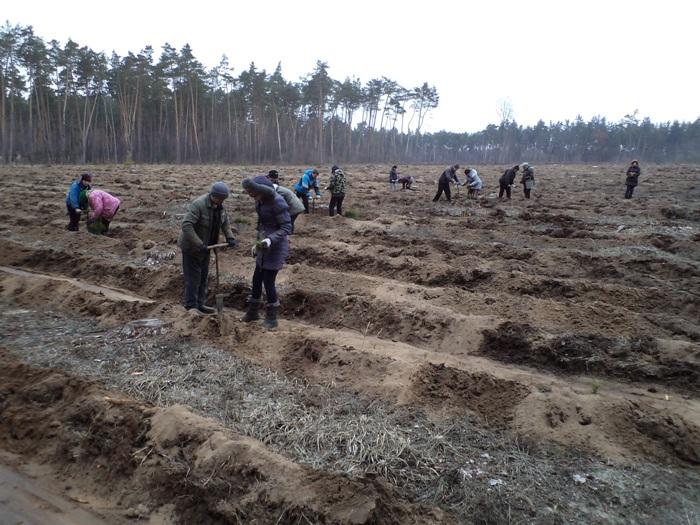 Кіровоградщина. 300 га лісових насаджень створили на Кіровоградщині